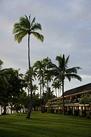 the coconut tree by seaside