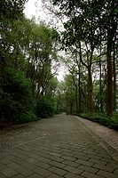 the flagged path between trees