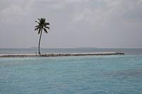coconut trees on seashore