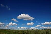 the wide grassland