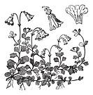 Linnaea borealis or Twinflower, vintage engraved illustration  Trousset encyclopedia 1886 - 1891