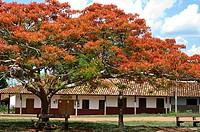 Bolivia. Santa Cruz. Colonial Church of Santa Ana (Chiquitania). Old Jesuit Mission(1755). UNESCO World Heritage Site. Main square. Flamboyánt tree (D...