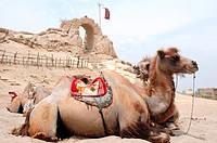 Camels in front of an old castle