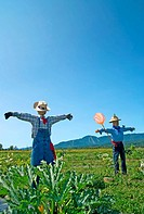 Scarecrows in the field