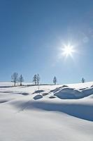 Landscape of Biei in winter, Kamikawa, Hokkaido, Japan, Asia