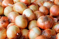 Pile of yellow Onions