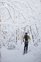 A man ski touring amoungst snow covered hardwoods, JayPeak backcountry, Vermont, United States of America