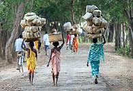 Asia,India ,Orissa,near Jeypore, Baliga market,women carrying basket on his head