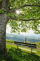 Bench under Lime-tree in Spring, Kanton Zug, Switzerland