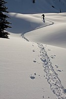 A male skier follows a skin track to head back home at the end of a day. Sol Mountain Lodge, Monashees, British Columbia, Canada