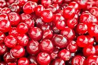Cranberry close_up
