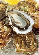 French Oyster Called Marennes d´Oleron, ostrea edulis, Seafoods on Ice