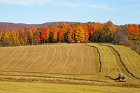 making hay in the autumn, abercorn quebec canada