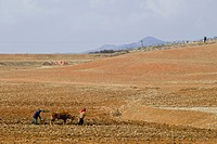 North Korea, South Pyongan province, peasants ploughing the fields