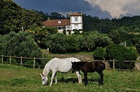 Portugal, Minho region, situated on a hill covered with vineyards in the district of Viana do Castelo and Ponte de Lima near the Guest House Paco de C...