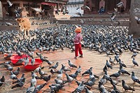 Young girl playing with the doves at Jagannath Temple in Durbar Square - Kathmandu, Bagmati Zone, Kathmandu Valley, Nepal