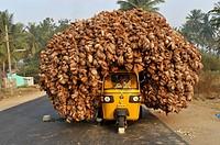 Auto-rickshaw transporting coconuts,Tamil Nadu,South India,India,Asia