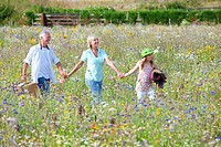 Smiling senior couple holding hands with granddaughter and walking in field of wildflowers