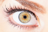 Close up of human female eye with fake eyelashes