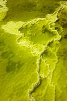 Salt Formations on Saltwater Lake, Dallol, Danakil Desert, Ethiopia, Africa