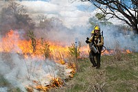 Detroit, Michigan - Workers wearing protective clothing burn parts of River Rouge Park with the aim of eliminating invasive species  After the fire, s...