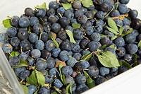 Fresh ripe plums