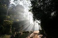 Sunlight streams through the jungle near the Longneck village Approximately 300 Burmese refugees in Thailand are members of the indigenous group known...