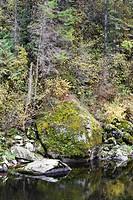 Moss Grown Over The Boulder On Riverside