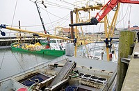 Mussels are loaded from boat onto a truck, mussel fishery on the island of Sylt, Hoernum, Schleswig-Holstein, Germany, Europe
