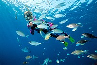 Snorkeler in tropical coral reef with rabbitfish (Siganus) and other coral fishes, Maldives, Indian ocean, Asia