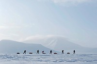 Group of ski hikers with pulkas and a Norwegian flag flying, Hayesbreen, Spitsbergen, Svalbard, Norway, Europe