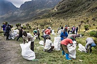 Porters preparing to start, Bujuku Hut 3980m Rwenzori, Uganda The income of this service is a very important part of the local economy The Rwenzori Mo...