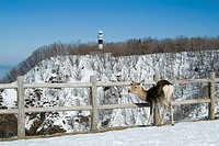 Shiretoko Utoro lighthouse and Yezo Deer