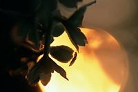 Bug in dusk