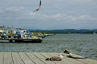 Marina at Ishikari_River estuary