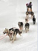 International Dog Sled Race, Gadmen, Bernese Oberland, Switzerland