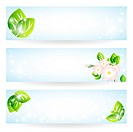 Set of banners with green leaves and flowers
