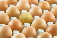 One golden egg with many ordinary fresh rural eggs packed into cardboard container