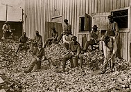 Oyster shuckers at Apalachicola, Fla. This work is carried on by many young boys during busy seasons. This is a dull year so only a few youngsters wer...