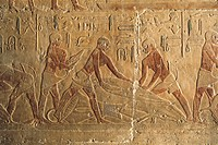 Egypt - Cairo - Ancient Memphis (UNESCO World Heritage List, 1979). Saqqara. Necropolis. Private funerary mastaba of Ti, 5th Dynasty. Painted relief o...