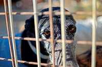 Visit to Las Nieves, a dog shelter that acommodates more than 700 dogs and 400 greyhounds  After healing and preparing them, they send the greyhounds ...