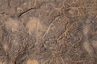 Rock engravings on the rocks of Tin Taghirt, Algeria, Africa