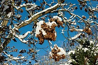 Früchte mit Schnee