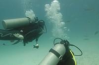 Scuba divers swimming underwater, Santa Cruz Island, Galapagos Islands, Ecuador