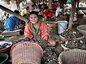Woman working taking oyster flesh from the shell in Bang Saen, Thailand, Asia