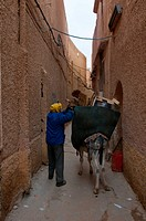 Man loading a pack donkey in the village of El Atteuf in the UNESCO World Heritage Site of M'zab, Algeria, Africa