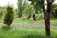 Man riding on a donkey through the fields of an oasis in the Valley of Roses, Dades Valley, southern Morocco, Morocco, Africa