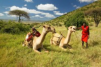 Masai in red robe with Camels