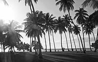 Palm trees growing on beach, Rincon, Puerto Rico