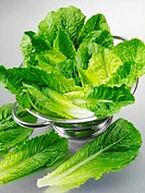 Fresh Romaine, Cos Lettuce in Colander